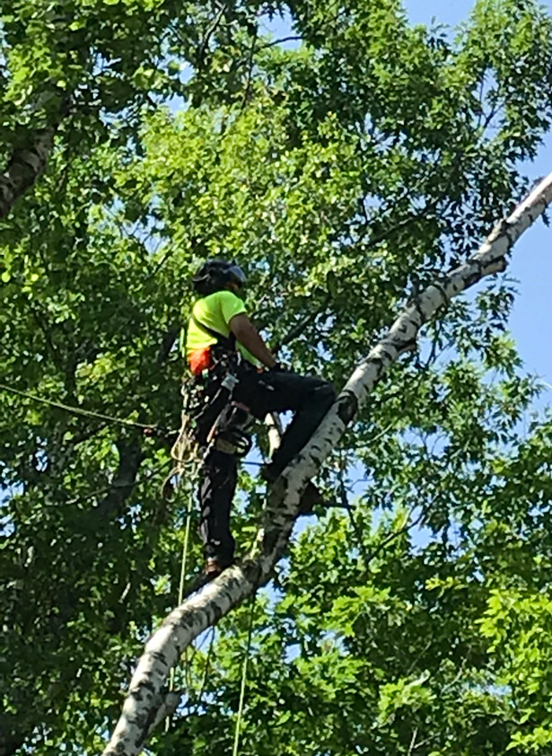 Kucharski Tree Pruning Service